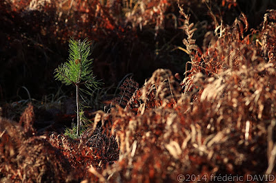 nature végétation forêt Fontainebleau Seine-et-Marne