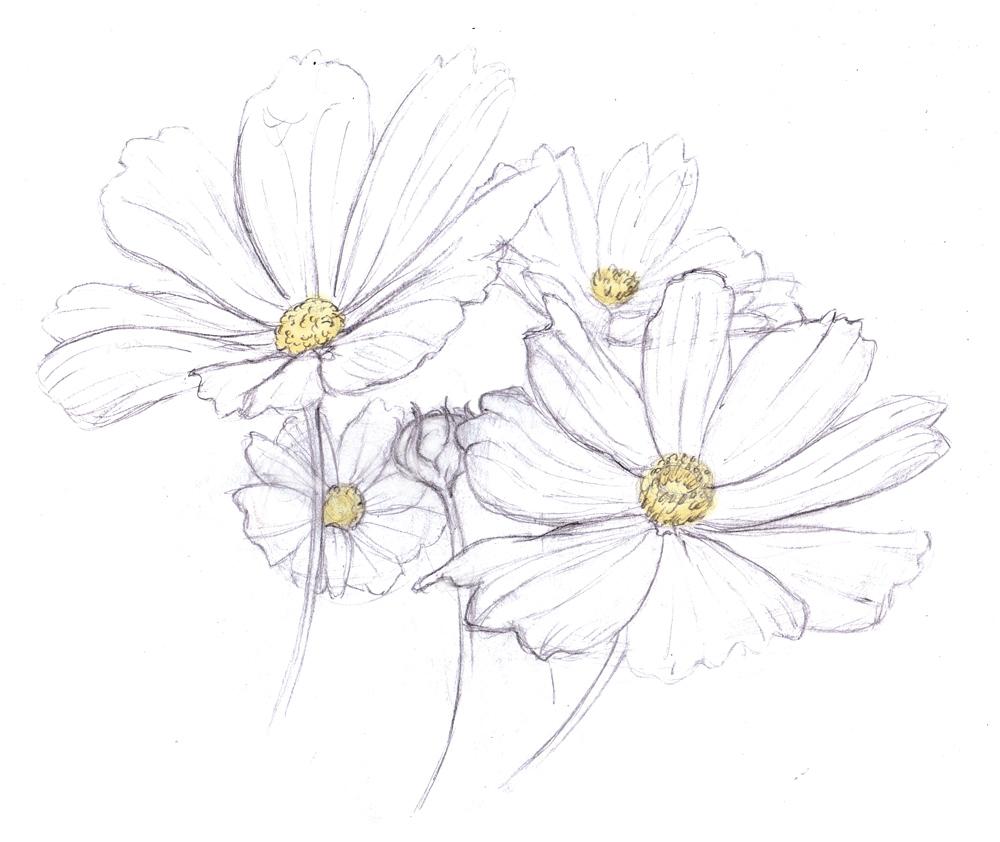 Magellin Blog Daisies Drawing