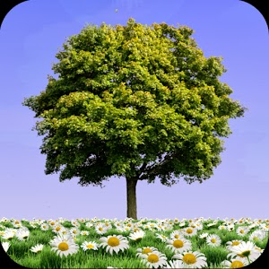 Summer Trees Live Wallpaper v1.12 APK PRO DATA