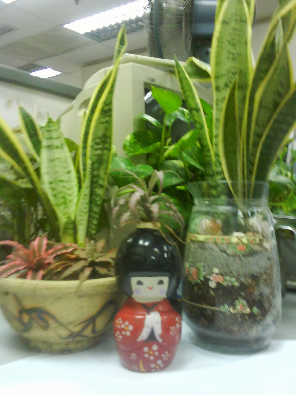 plants for office cubicle. This Moss Collection Is Something New. Other Than That, The Rest Seemed To Be Doing Fine. Plants For Office Cubicle L