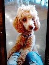 Mi amigo Dandy .