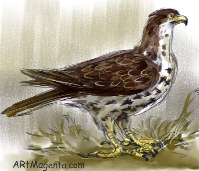 Honey Buzzard is a bird drawing by artist and illustrator Artmagenta