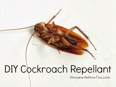 5 effective diy cockroach killer techniques abcdiy. Black Bedroom Furniture Sets. Home Design Ideas