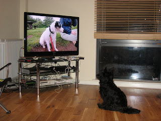 Dog Watching Television
