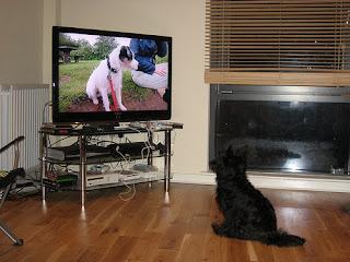 Dog Watching Television
