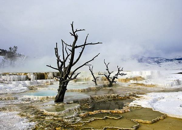 Mammoth Hot Springs - USA