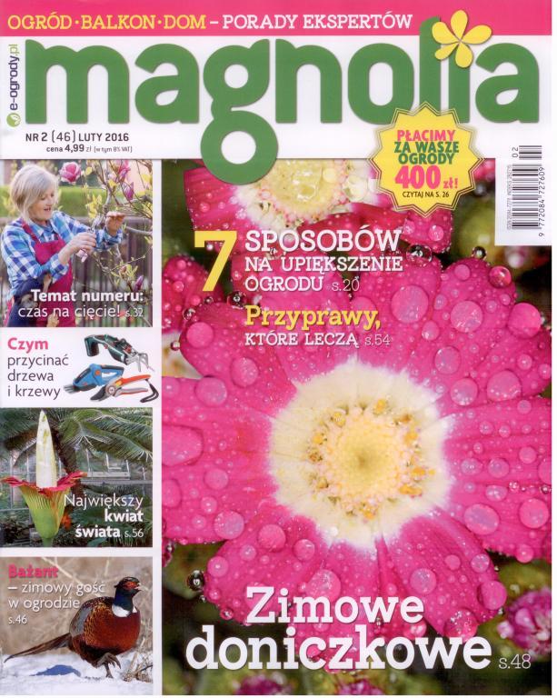 Magnolia Nr2 (46) LUTY 2016