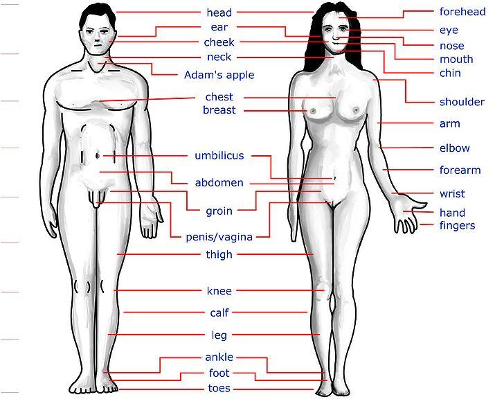Women+body+parts+photos+name