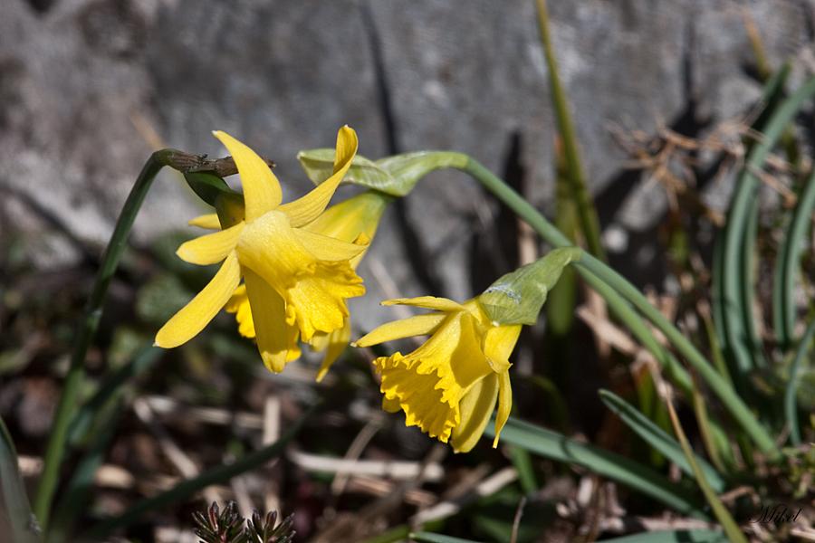 Narciso de Asturias