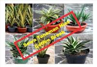rental tanaman hias