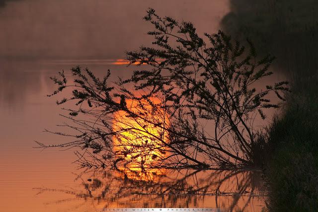 Reflectie van de opkomende zon in het water - Reflection of the rising sun in the water