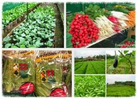 Sayuran Berlabel  Non Dan Organik