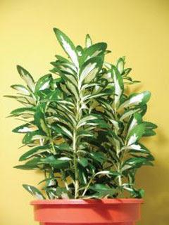 Como decorar Vasos de Plantas