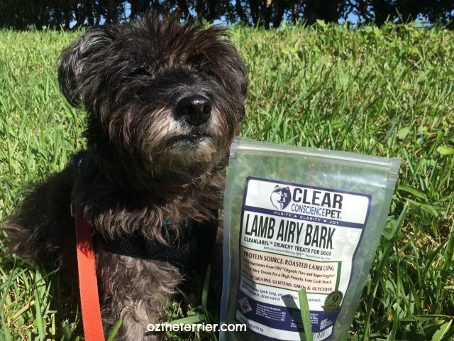 Oz the Terrier says thank you to Clear Conscience Pet for sending a care package of treats