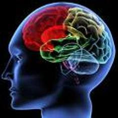 Le Cerveau & Les Drogues