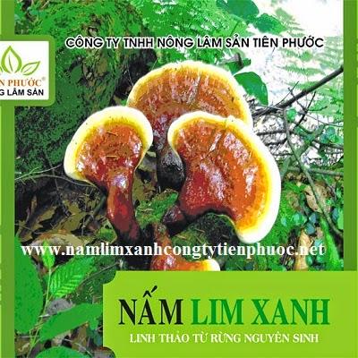 Sản phấm nấm lim xanh giúp bổ sung vitamin C