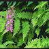 Perngertian Tumbuhan Kormophyta dan Ciri Cirinya