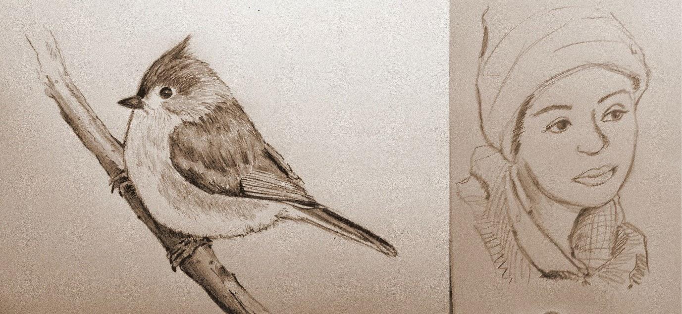 Dibujos a lpiz de aves  Imagui
