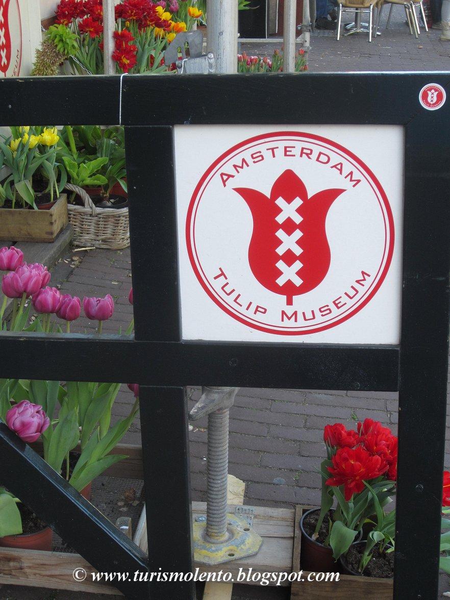 Turismo Lento: Primavera ad Amsterdam: le fioriture di primavera al ...