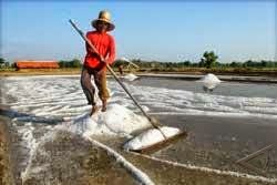 Produksi garam probolinggo