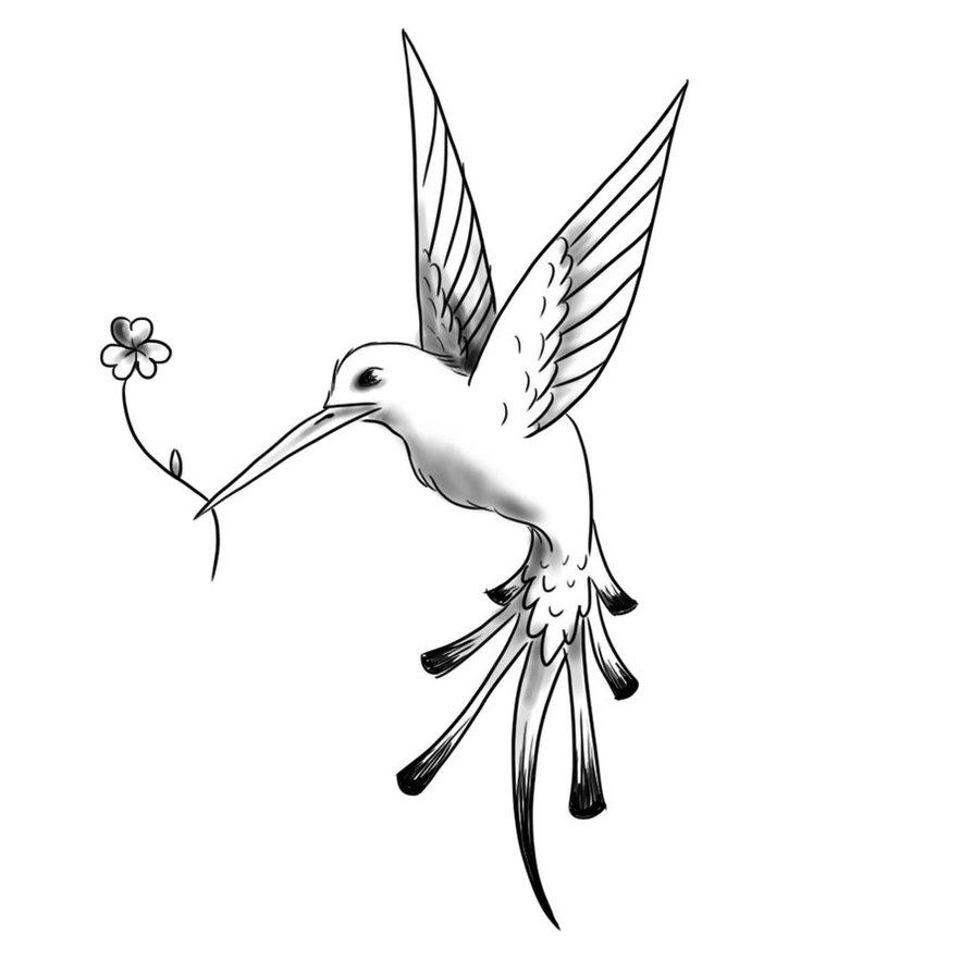 Hummingbird And Honeysuckle Tattoo Hummingbird tattoo black and