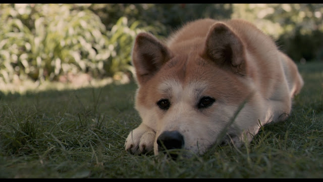 Hachi A Dog S Tale Japanese Version