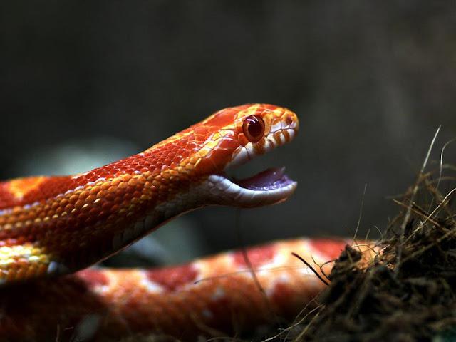 Serpientes y Reptiles