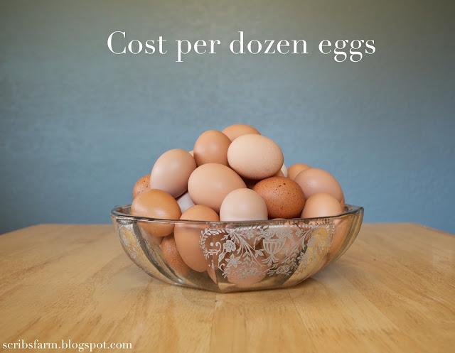 cost dozen eggs raising chickens