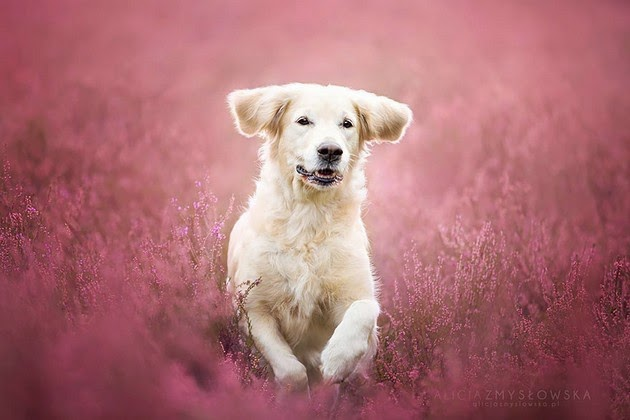 dog portrait photography1