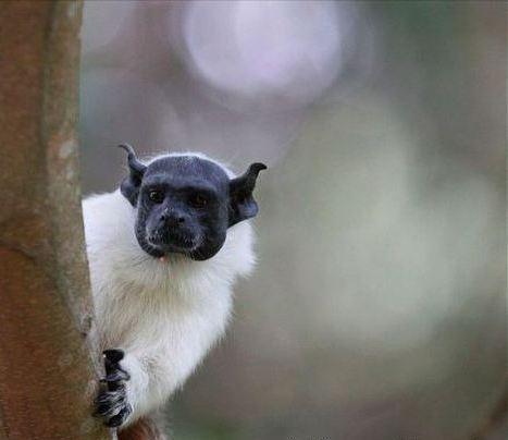 Foto Binatang Seram