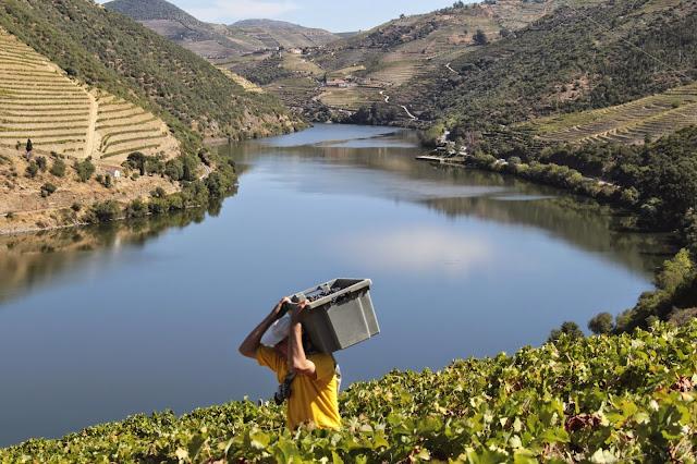 Divulgação: Vindimas à do Pôpa 2014: programa no Douro a partir de 20 de Setembro - reservarecomendada.blogspot.pt