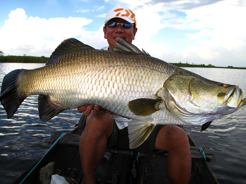 Big fishes of the world barramundi lates calcarifer for Large ocean fish