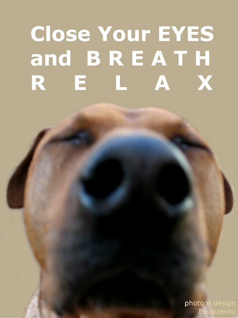 relaxation technique, dog photos, cute dog photos, dogs photos, funny dog photos, dog photo gallery, dogs photo, dog photography, pet photography, pet pictures, relaxation, relaxation exercises, stress management, how to relax, relaxation methods