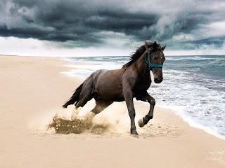 Caballo salvaje corriendo por la playa