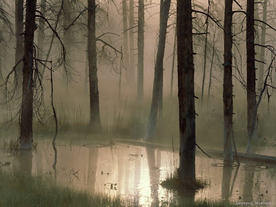 Forest Swamped Montana - Free Download Dekstop Wallpaper