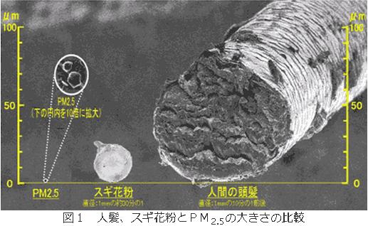 髪の毛、スギ花粉とPM2.5の大きさの比較