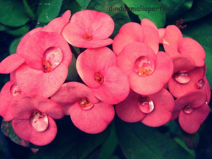 gambar macam macam bunga dan namanya