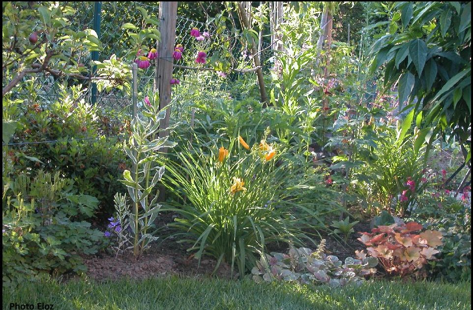 Un giardino di perenni in ticino manca poco for Piante giardino perenni