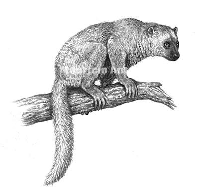 Primates fosiles Adapis