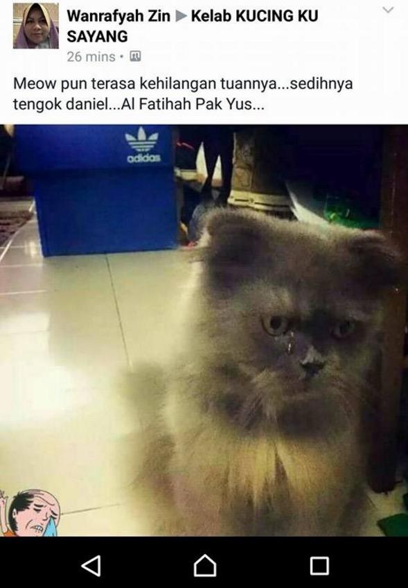Kucing Kesayangan Tangisi Pemergian Pak Yus Jambu