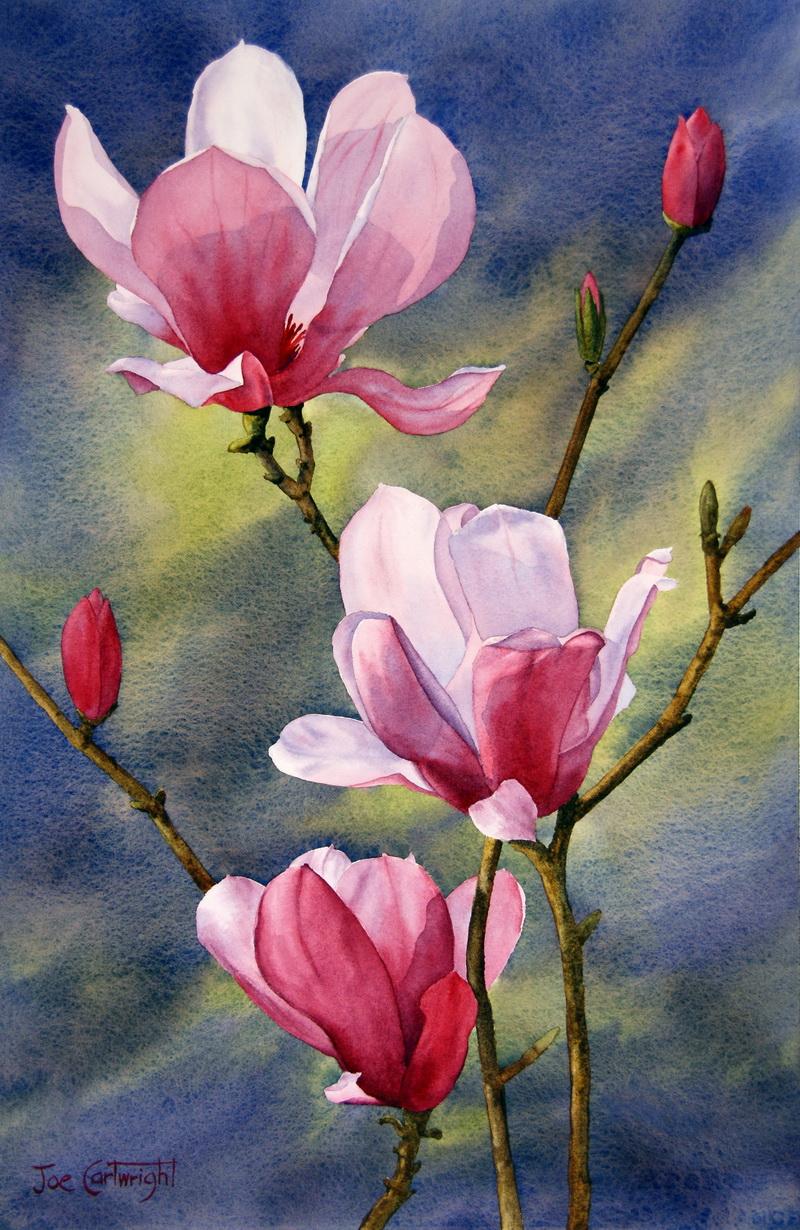magnolia painting - photo #22