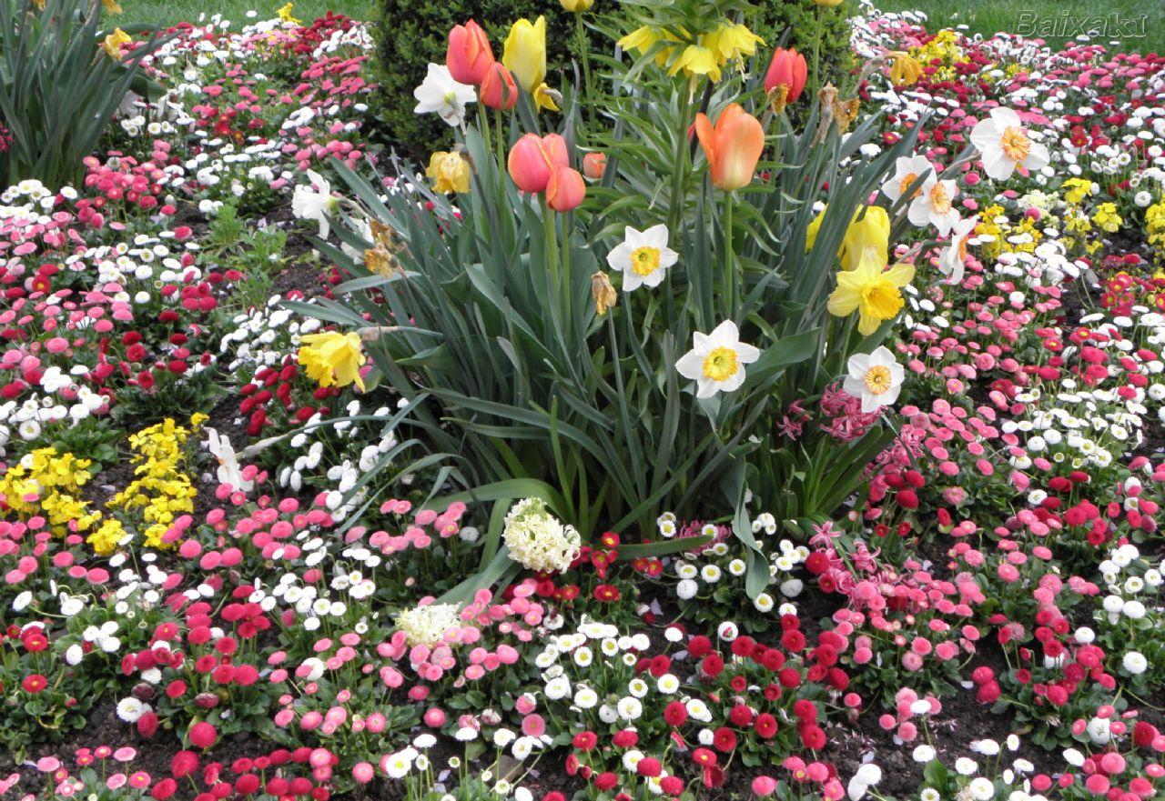 vivacidade de um jardim e suas flores e plantas pode depender de