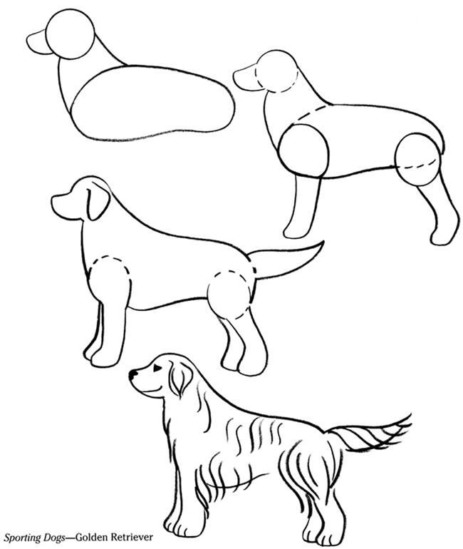 how to draw a labrador step by step easy