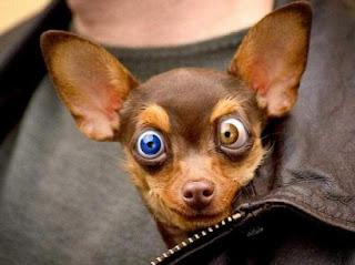 scary%2Bdog.jpg
