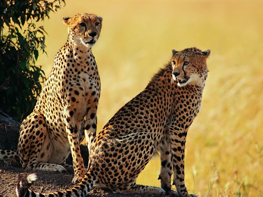 Beautiful Animals Safaris: Safari Amazing ! Beautiful Animal Safari