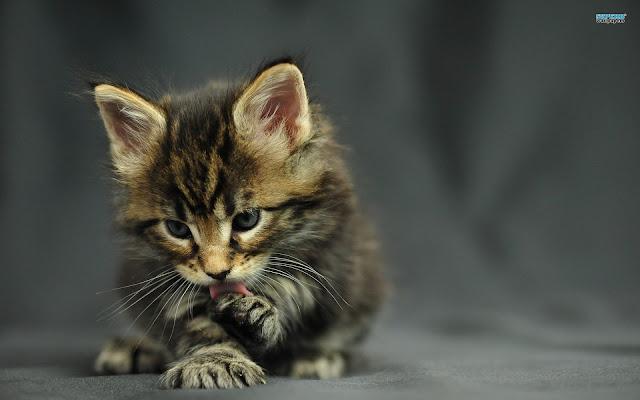 Cute Pussy Cat 40