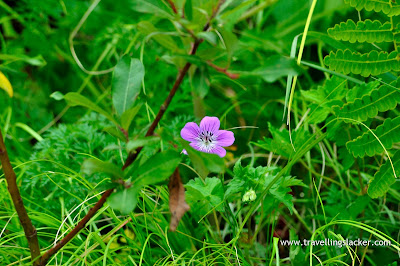 A Flower in the Valley of Flowers