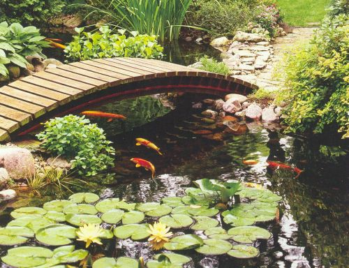How to make your own backyard fish pond free quality plr for Backyard fish pond