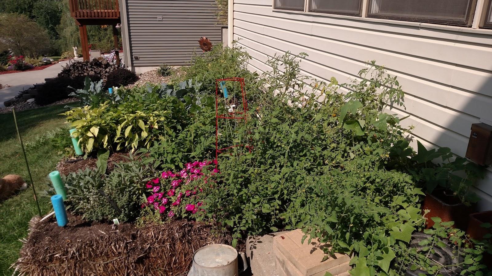 Straw Bale Garden Harvest Penny Pincher Journal