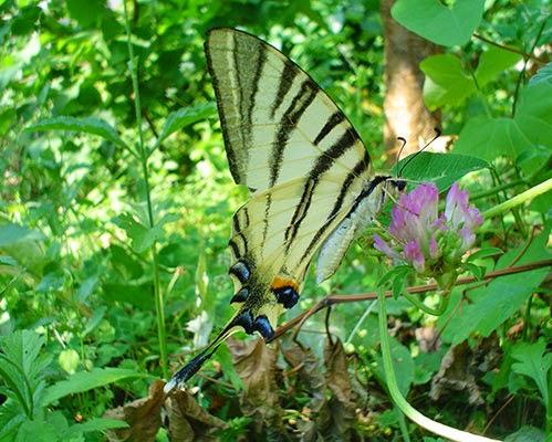 Schmetterling im Gras
